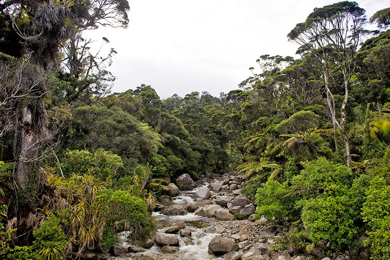 Wekakura Creek